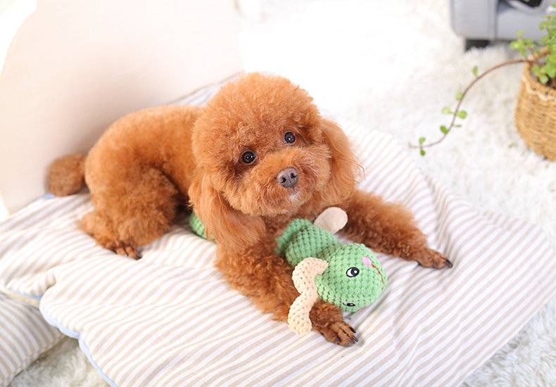 If you have a dog, give it these five toys!